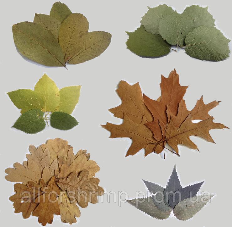 Набор листочков для креветок