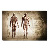 Светящиеся Картины Startonight Анатомия Человека Абстракция Печать на Холсте Декор стен Дизайн Интерьер