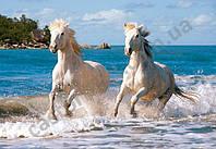 "Пазлы ""Castorland"" 1000шт (102433) 68*47 см (Белые лошади)"