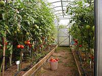 Повышаем тепличный урожай с энергоэффективными LED-светильниками