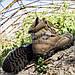 Кроссовки тактические (SAIGON) COYOTE (Размер 45), фото 6