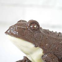 """Шоколадная фигура """"Жаба"""" КЛАССИЧЕСКОЕ сырье. Размер: 130х98х76, вес 430г, фото 1"""