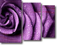 """Картина модульная """"Фиолетовая роза. Триптих""""  (800х1020 мм)  [3 модуля]"""