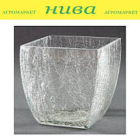 Кашпо Орхідея Скло прозора квадрат 15*15 см