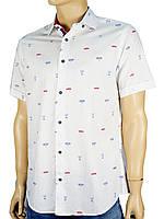 Рубашка Jack Polo 60/1 DAR 23003 белая с принтом