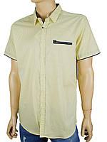 Рубашка Еnisse EGK1343-KZ1292V20 с принтом в лимонном  цвете