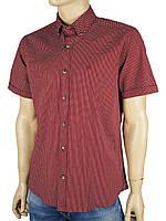 Рубашка Barcotti 0093-Н с принтом цвет - бордо,темно-синий,голубой.
