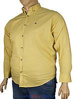 Рубашка мужская с принтом  Barcotti 0185 B большого размера