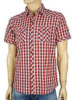 Мужская хлопковая рубашка Negredo в клетку на  кнопках
