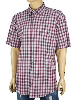 Мужская хлопковая рубашка Razonni в клетку