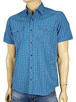 Рубашка мужская Desibel 0330 в клетку на кнопках