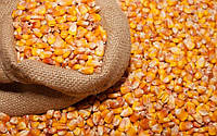 Кукуруза кормовая в мешках 25кг.
