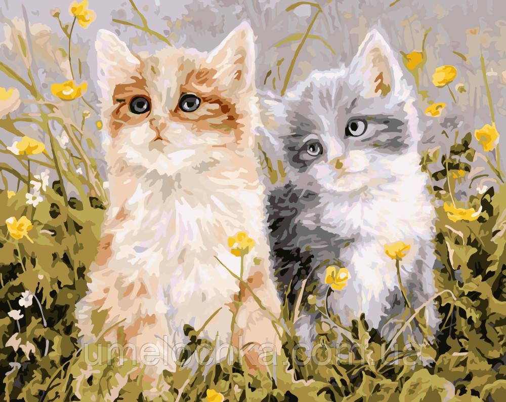 Картина по номерам Котята и лютики Вейерс Персис Клейтон (BRM-G294) 40 х 50 см