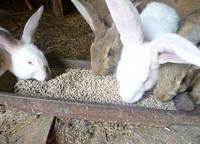 Комбикорм для кролика травяная мука + зерносмесь