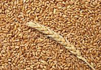 Пшеница кормовая в мешках 25кг.