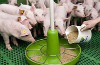 Корм для свиней  (дробленый)