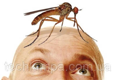 Опасные переносчики - насекомые