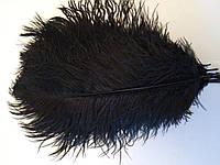 Перо страуса