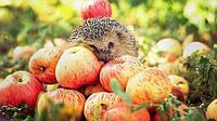 Спрос и цены на импортные яблоки