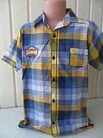 Тениска для мальчика в клетку 9-12, фото 1