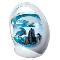 Tetra Betta Ring Дизайнерский аквариум для петушков