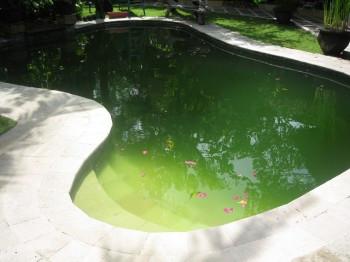 Зеленеет вода, как бороться?