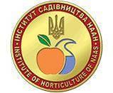 Майоран садовый Majoran hortensis (семена) 100г, фото 2