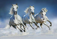 Фотообои  Арабские кони  366*254