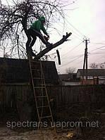 Спилить дерево 0971443135 Удаление деревьев, Кронирование.