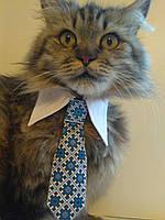 Галстук с воротничком  для котика или собачки  в ассортименте .