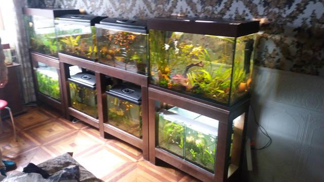 Стеллажи для аквариумов