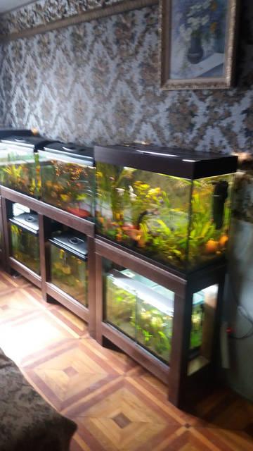 Стеллажи для аквариумов 2