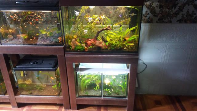 Стеллажи для аквариумов 3