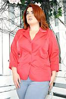 Пиджак Паола 001 большие размеры