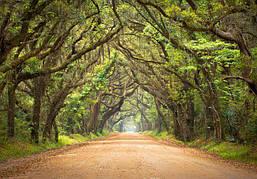 Фотообои Светящиеся Тропа в Лесу Природа Пейзаж Декор Стен Дизайн Интерьера Зеленые Деревья