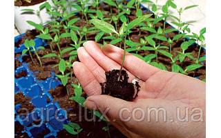 Правильный полив семян томатов
