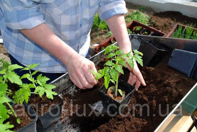 Семена томатов Ф1