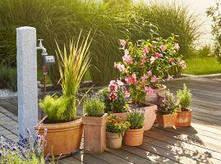 Кімнатні рослини, автоматичний полив горщикових рослин