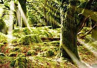 Фотообои Светящиеся  Яркие Лучи Солнца Природа Пейзаж Декор Стен Дизайн Интерьера Зеленые Деревья