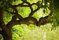 Фотообои Светящиеся Зеленное Дерево Природа Пейзаж Декор Стен Дизайн Интерьера