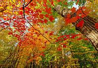 Фотообои Светящиеся Красные Листья Природа Пейзаж Декор Стен Дизайн Интерьера Зеленые Деревья