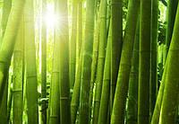 Фотообои Светящиеся Бамбуковый Лес Природа Пейзаж Декор Стен Дизайн Интерьера