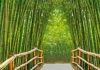 Фотообои Светящиеся Бамбуковая Аллея Пейзаж Природа Декор Стен Дизайн Интерьера