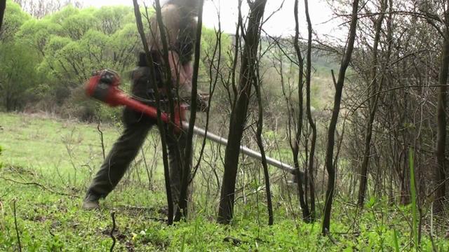 Очистка территории от молодых деревьев