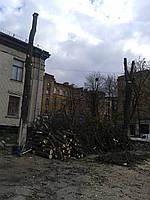 Спил деревьев бензопилой, обрезка аварийных веток