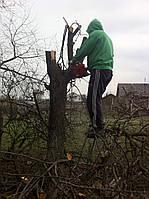 Уборка сада, обрезка садовых деревьев Киев.