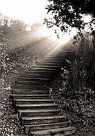 Фотообои Светящиеся Черно Белые Каменная Лестница в Лесу Природа Пейзаж Декор Стен Дизайн Интерьера