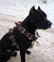 CoLLar Шлея грузовая с утяжелителями для крупных-средних собак №1 (0658)