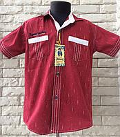 Рубашка 5-8 лет с коротким рукавом бордо, фото 1