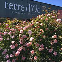 Новые поступления  органической косметики ТМ Terre d'Oc!